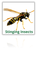 Exterminating Wasps, Hornets, Bees